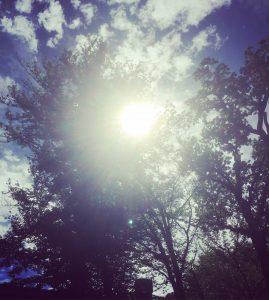 Sonnenlicht am blau-weißen Himmel scheint durch eine Baumkrone hindurch