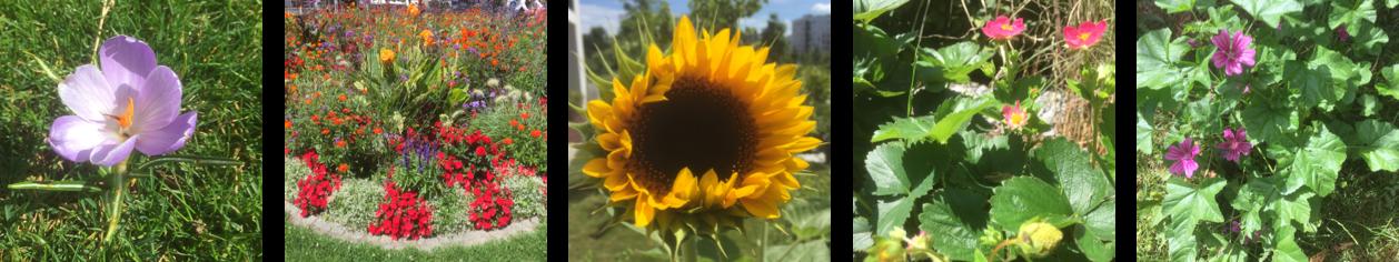 Bunte Blumen. Von Krokussen über Sonnenblumen hin zu bunten Wiesenblumen und einem gepflanzten bunten Blumenmeer sind verschiedene Blumentbilder gezeigt