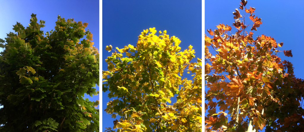 http://blog.forschenfuerkinder.de/2017/10/16/versteckte-farben/ Baum, Farben, Herbst