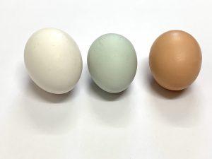 Hühnereier. Grüne Schale, weiße Schale, braune Schale