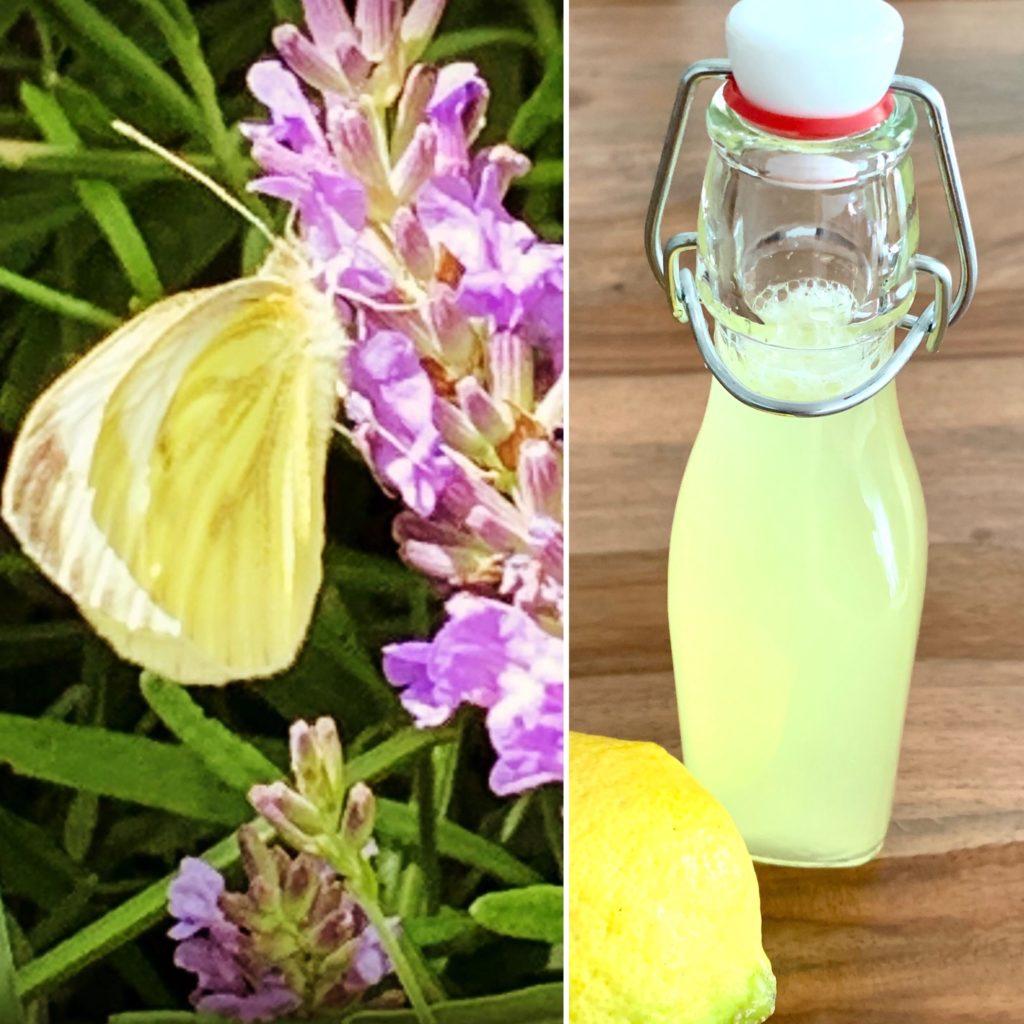 Zitronenfalter meets Zitronensirup für Limonade