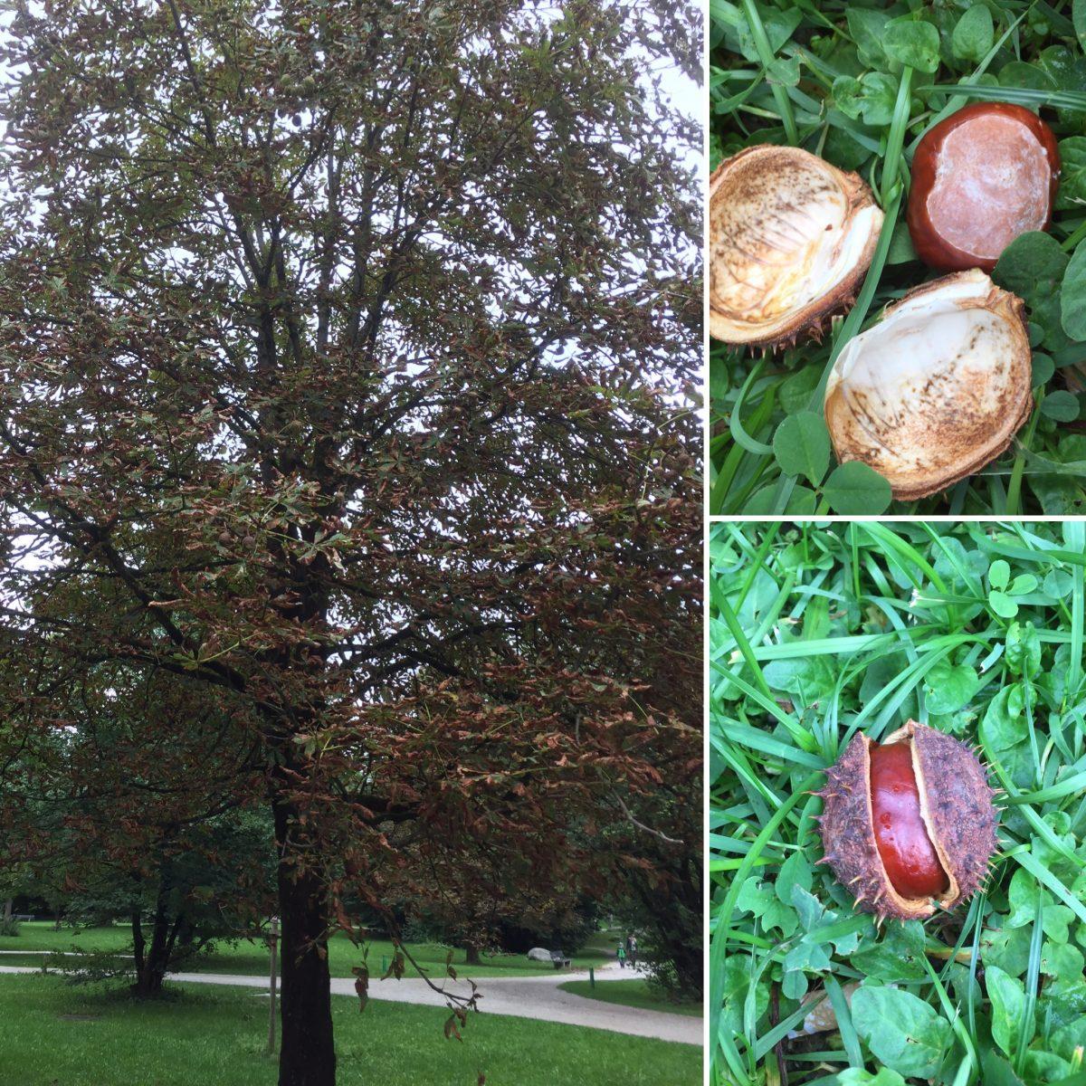 Herbstliche Forscherei