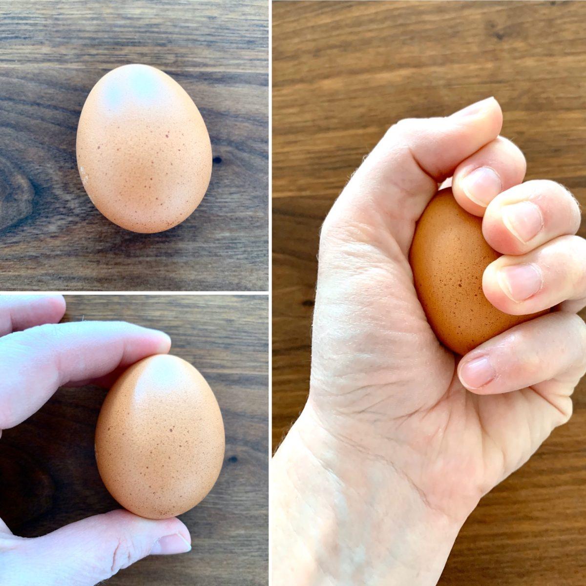 SCHNELL GEFORSCHT: Kräftemessen mit einem Ei