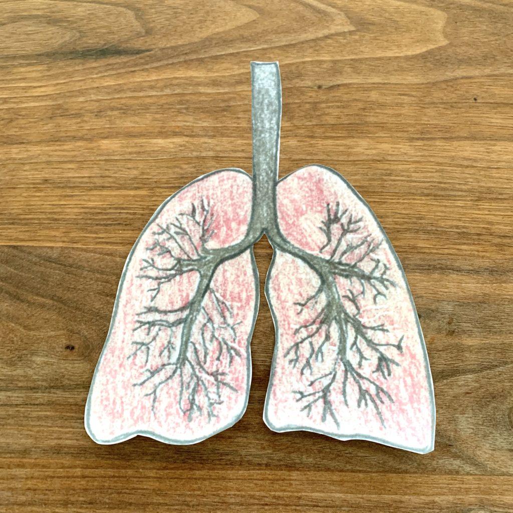 Forschen für Kinder Lunge nachbauen erklärt für Kinder Experimente für Kinder