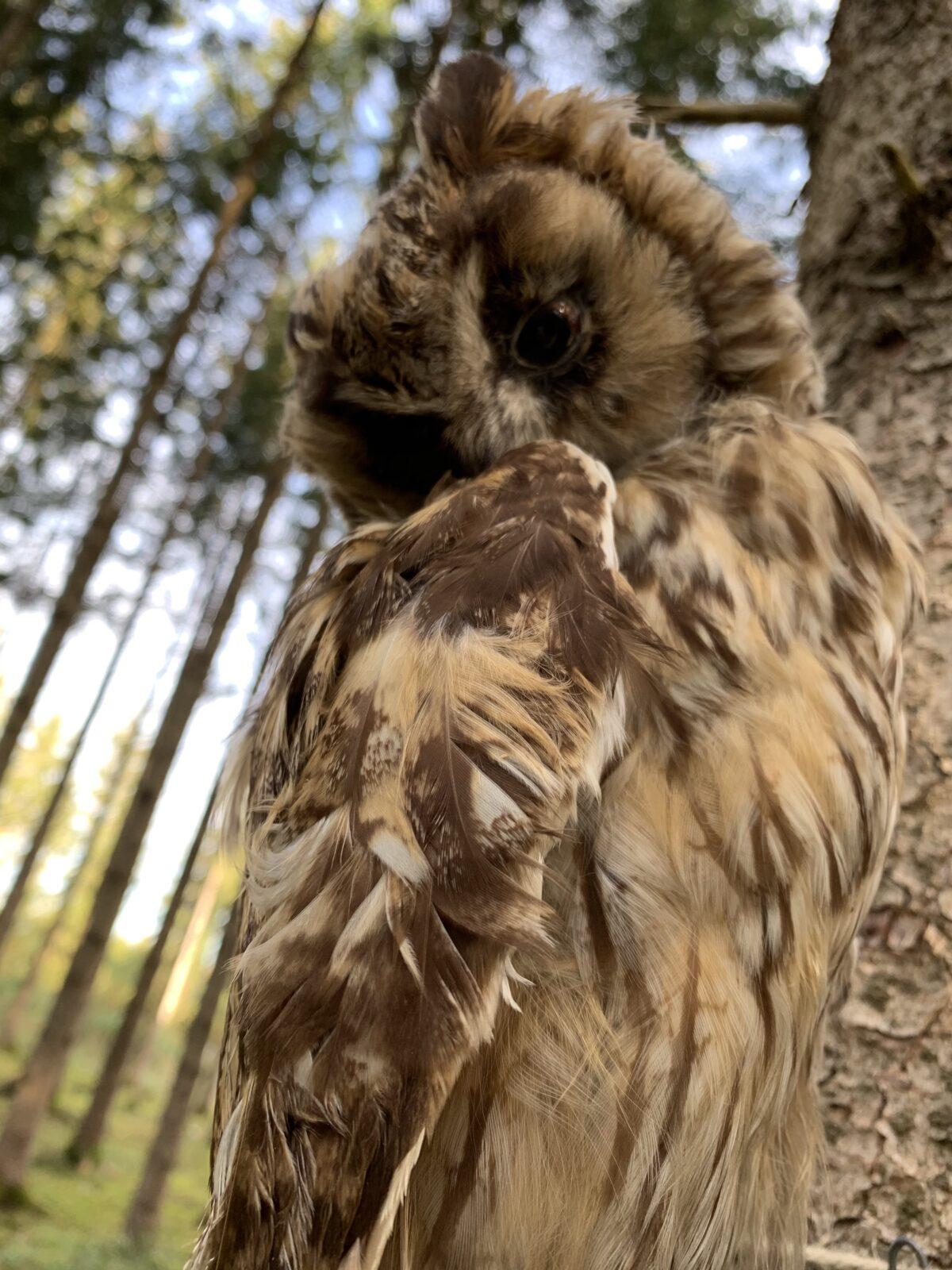 AUSFLUG: Komm mit in den Forschererlebniswald